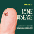 What is Lyme Disease